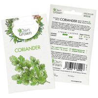 Coriander Seeds (Coriandrum...