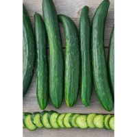 Gurney's Cucumber Tasty Green...